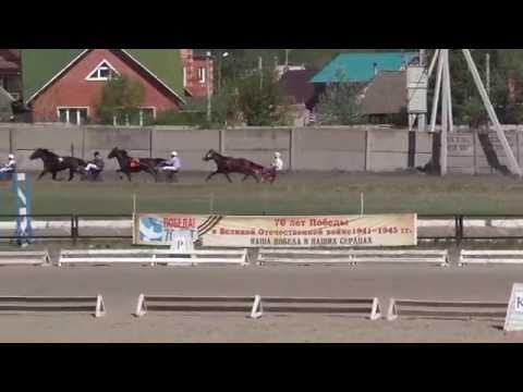 10.Бега- заезд лошадей 3-х лет