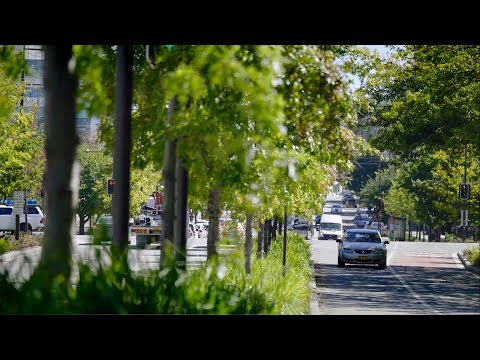 Constitution Avenue, Canberra, ACT, Australia | Case Study | Citygreen