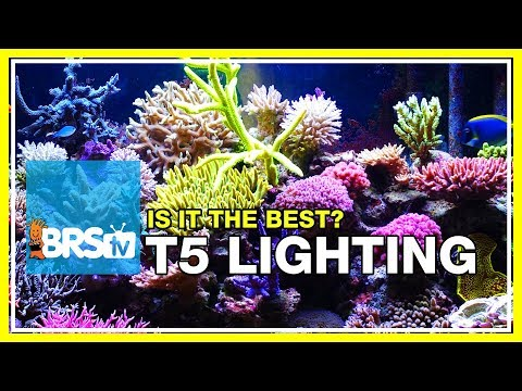Week 19: Compelling data for using T5 lighting on your reef