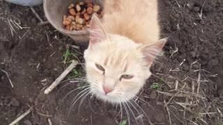 Мы с котом сажаем картошку и бобы