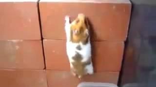 Паркур хомяка Hamster`s Parkour Юмор! Прикол! Смех