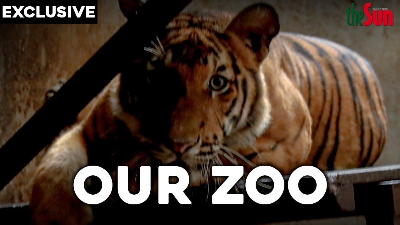Download Our Zoo