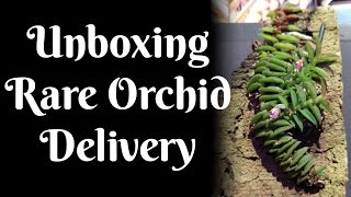 Unboxing Rare Orchid Delivery
