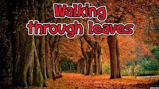 Walking Through Auttum Leaves Sound Effect
