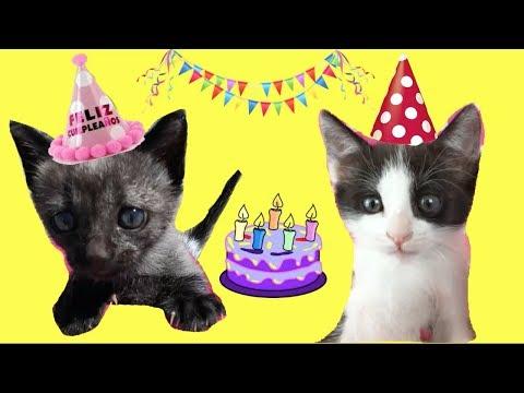 Cumpleaños de mis gatitos bebés Luna y Estrella para niños / Funny cats