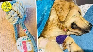 Dog Owner Posts Heartbreaking Warning About 'Rope Toys' for Dogs After Pup Dies