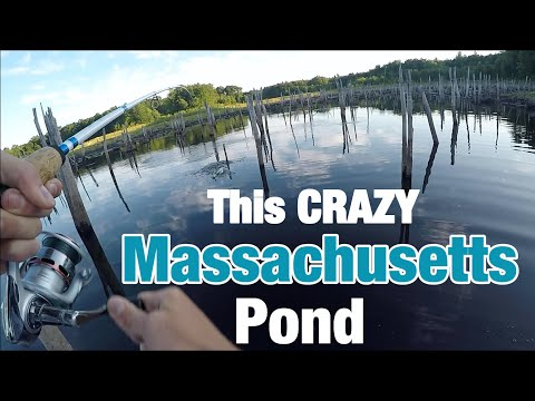 Crazy MASSACHUSETTS Bass Fishing!