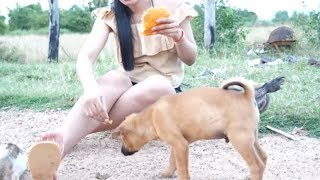 Top Girl and cute dog videos - Girl playing and give food to puppies Part 4