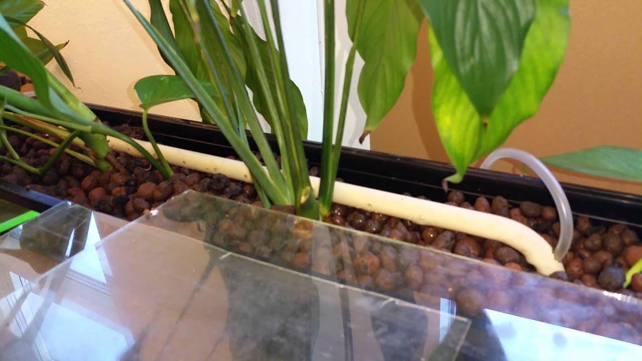Pond Filter Plants