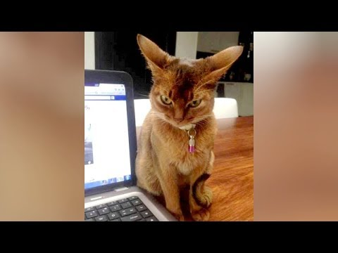 Bet you'll LAUGH AT EVERY VIDEO! - Best of SUPER FUNNY ANIMALS