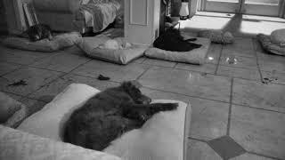 Senior Dog Gathering Room Cam 01-22-2018 03:01:49 - 04:01:50