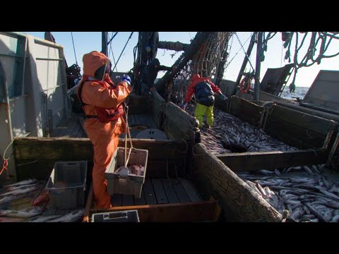 Alaska's Pollock Fishery: A Model Of Sustainability