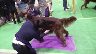 """犬種の好みは 千差万別です。 撮影者は、""""セッター"""" マニア なので、 セ..."""