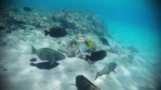 Sunrise Royal Makadi Bay Hotel and Spa, Hurghada, Red Sea, Egypt - Snorkeling 2015(Music: Shine - Years and Years This video was taken in Hurghada, Egypt in the hotel