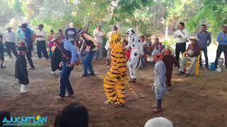Video danzas tipicas mexicanas download MP3, 3GP, MP4, WEBM, AVI, FLV Agustus 2018