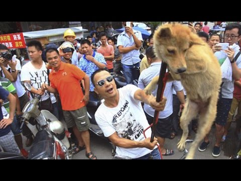 Yulin Dog Meat Festival Held In China Despite Mounting Protests