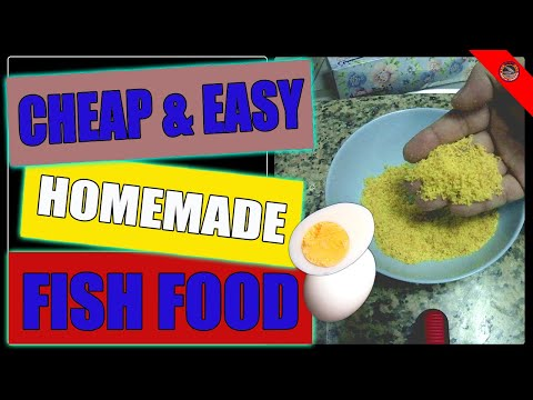 Cheap & Easy Homemade Fish Food - High Protein