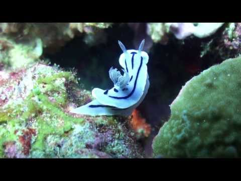 Best of Blue Borneo - Diving the Celebes Sea
