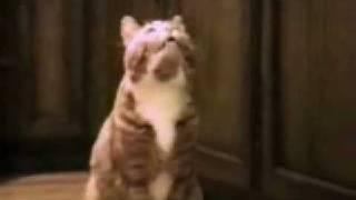 Говорящие кошки