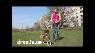 Что делать если пес прыгает на человека? Часть 2(как отучить прыгать на человека в игре или при встрече? как сделать что пес не прыгал на вас и членов семьи..., 2014-07-17T14:27:39.000Z)