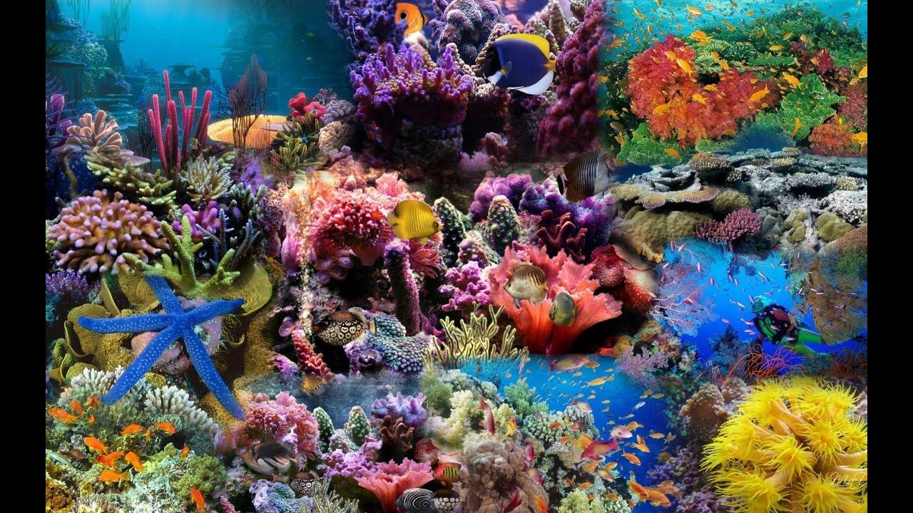 Rạn san hô   Cận cảnh những rạn san hô biển khoe sắc vào mùa xuân