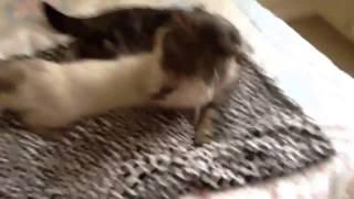 Куча кошек на кровати