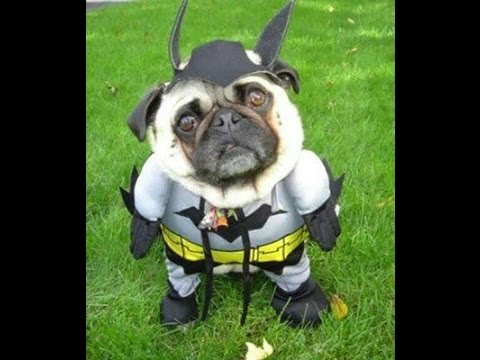 Funny Dog Costumes Halloween 2014 Find a Funny Halloween Costume for Your Dog & Funny Dog Costumes Halloween 2014: Find a Funny Halloween Costume ...