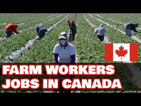 Real Jobs In Canada For Farm Workers