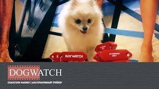 Спасатели Малибу (2017) - Альтернативный трейлер к фильму   Baywatch parody