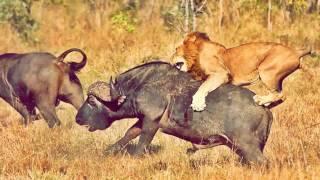Животный мир Африки.  Слайд Шоу.