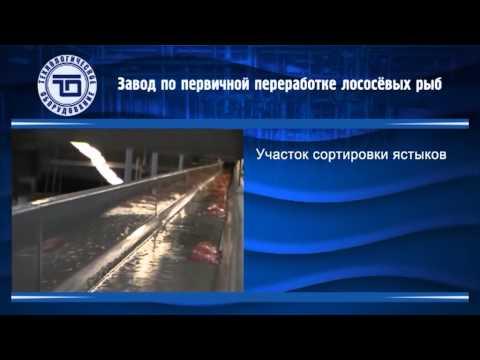 Оборудование для пищеблока детского сада купить в Москве