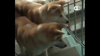 Жильцы дома по улице Парижской коммуны жалуются на 11 собак в соседней квартире
