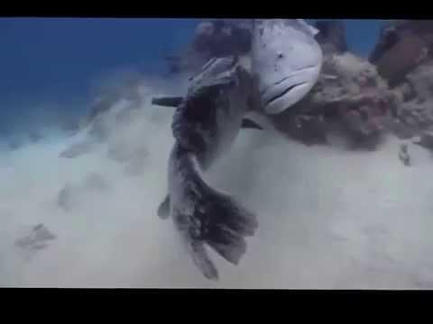 Австралия.Рыбы Большого Рифа.