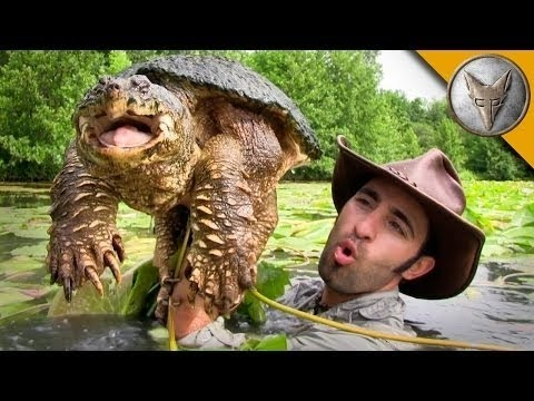 Brave Wilderness | Diving for Snapping Turtles!