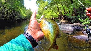 The BEST Lures For Creek Fishing! Multiple Species