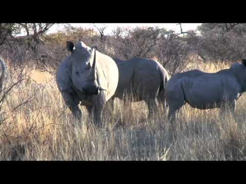 Book Trailer: Botswana