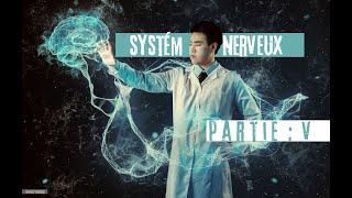 Episode#5: Les nerfs crâniens et Les nerfs rachidiens ou nerfs spinaux