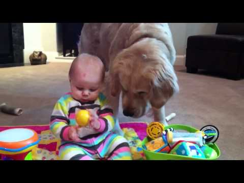 Baby Shares Toys with Golden Retriever