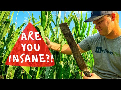 Farmers DO NOT Get Paid to DESTROY Crops!