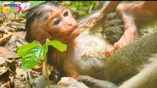 Oh! My Pity Newborn! Alex baby hungry too much|Please leave baby free kidnapper|Monkey Daily 791