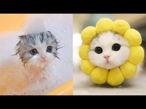 Baby Cats Cute And Funny Cat Videos Compilation 9 Aww Animals Youtube