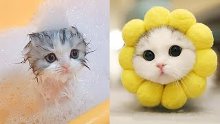 Baby Cats - Cute And Funny Cat Videos Compilation 9  Aww Animals