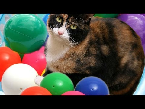 Cats playing with color Balls & Cute kitten meowing