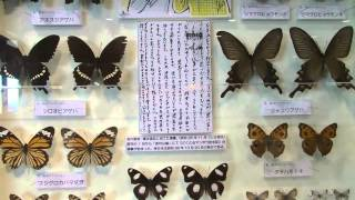 「どくとるマンボウ昆虫記」北杜夫先生の昆虫採集標本