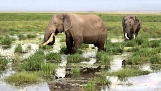 説明Africa Kenya Amboseli National Park Masai.