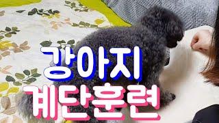 강아지 계단 적응훈련/강아지도 젊을때 다리보호를 해야돼…