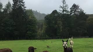 Britischer Zauber: Der Lake District ist bei jedem Wetter schön