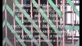 Фильм Ветиринария  ПУ97.wmv(, 2012-12-09T21:27:08.000Z)
