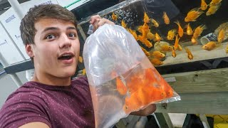 BUYING COLORFUL FISH for My AQUARIUM!!!