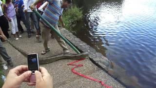 vuclip REAL anaconda en parque de la llovizna de venezuela